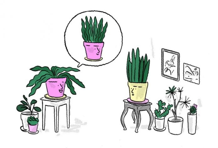 snake plant cartoon