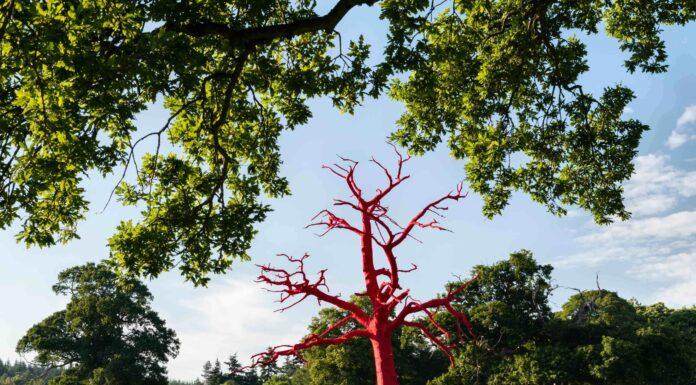 yard notes arboreal art